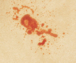 carpet stain removal sacramento ca