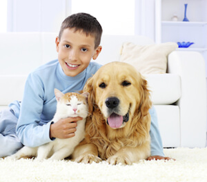 Selecting the Best Carpets for Kids and Pets