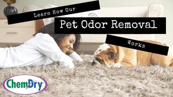 Learn How Our Pet Odor Removal Works