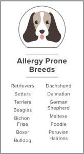 allergy prone breeds