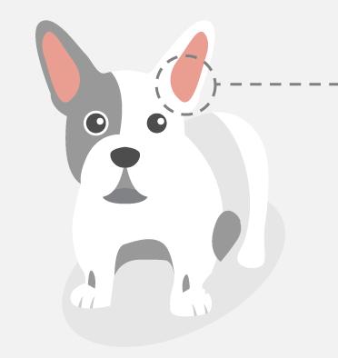 ear disease pupper