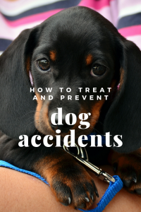 how to treat and prevent dog accidents vans chem-dry
