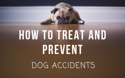 How To Treat And Prevent Dog Accidents