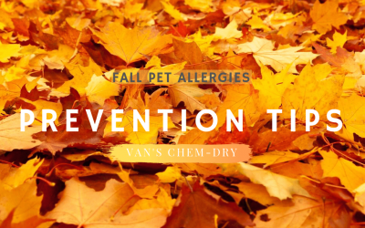 Fall Pet Allergies – Prevention Tips