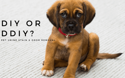 Pet Urine Stain & Odor Removal – DIY or DDIY?