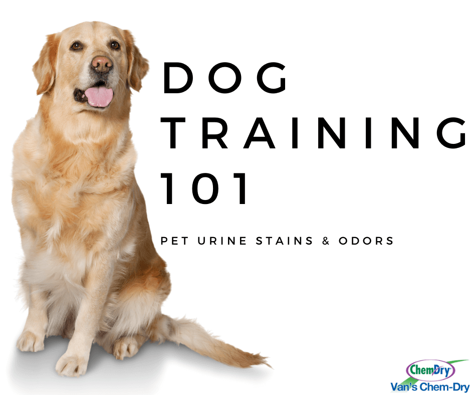 Dog Training 101 pet urine stains and odors vans chem dry