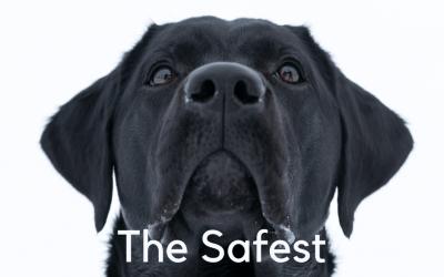 The Safest Pet Urine Removal Solution