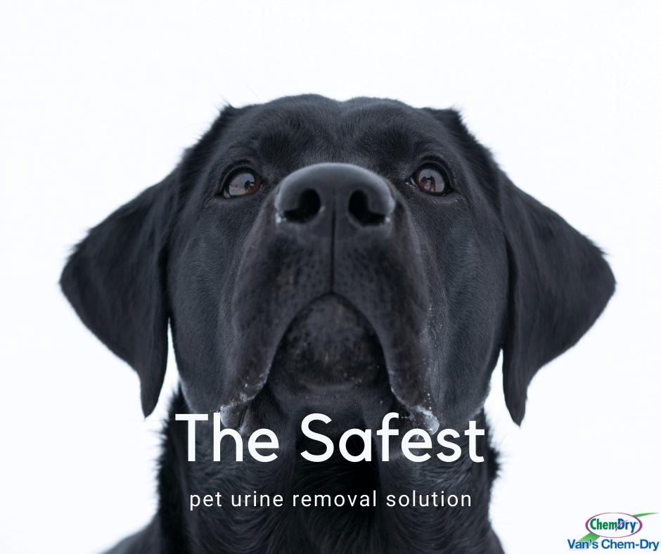 the safest pet urine removal solution vans chem dry